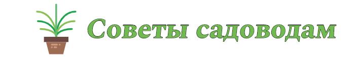 SaDpavlovka.ru